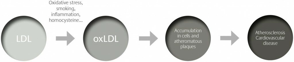 LDL -_ OxLDL