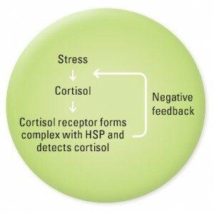 graph cortisol